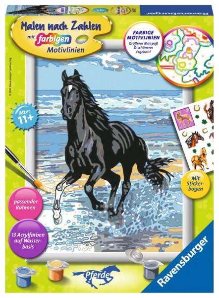 Malen nach Zahlen - Pferd am Strand