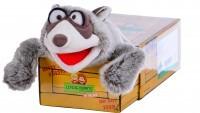Waschbaer El Bandito in the Box